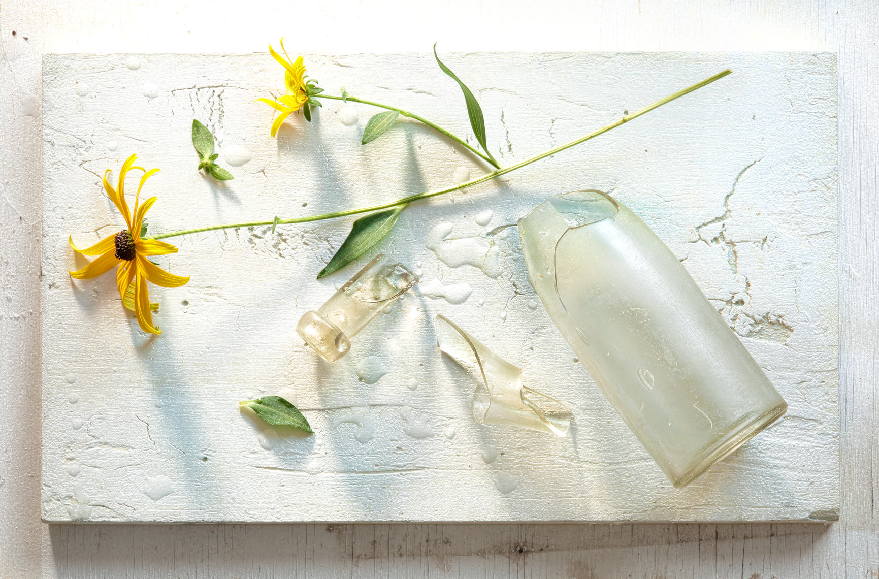 Flower with Broken Vase-Botanical Photography- © Aristo Studios
