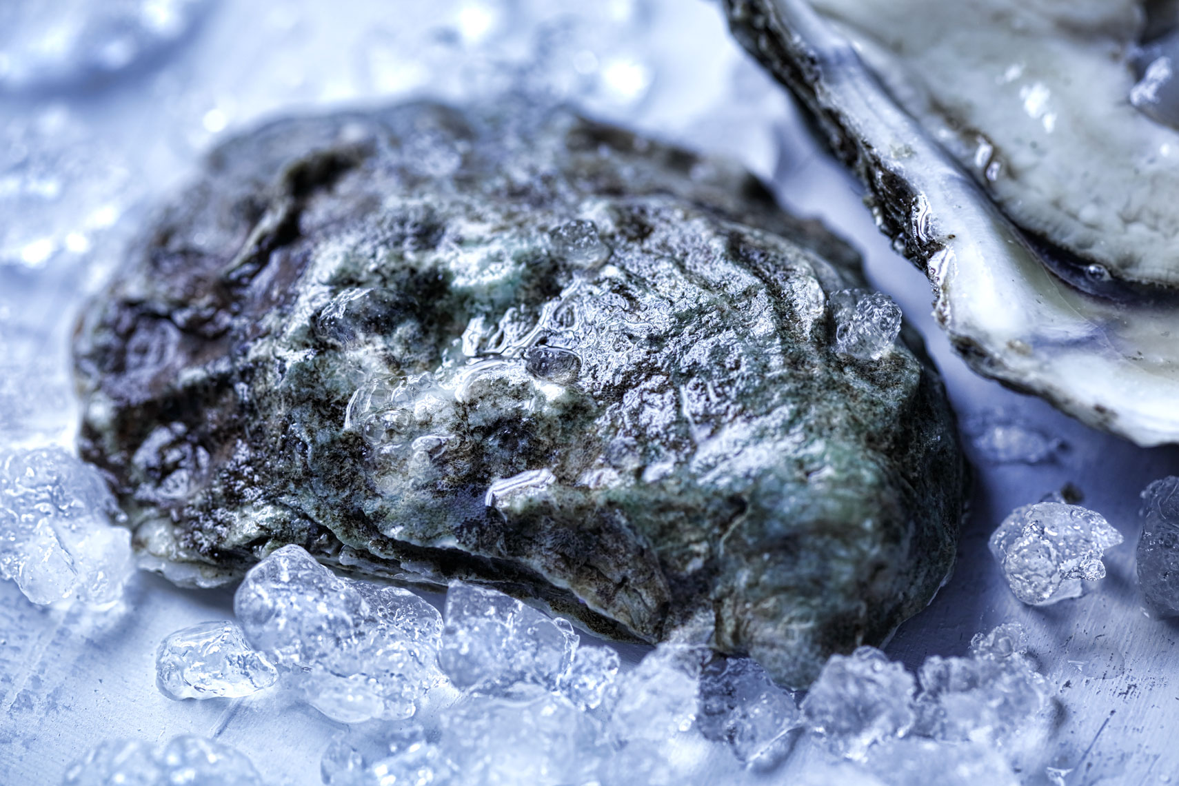 oyster -Food Photography- © Aristo Studios